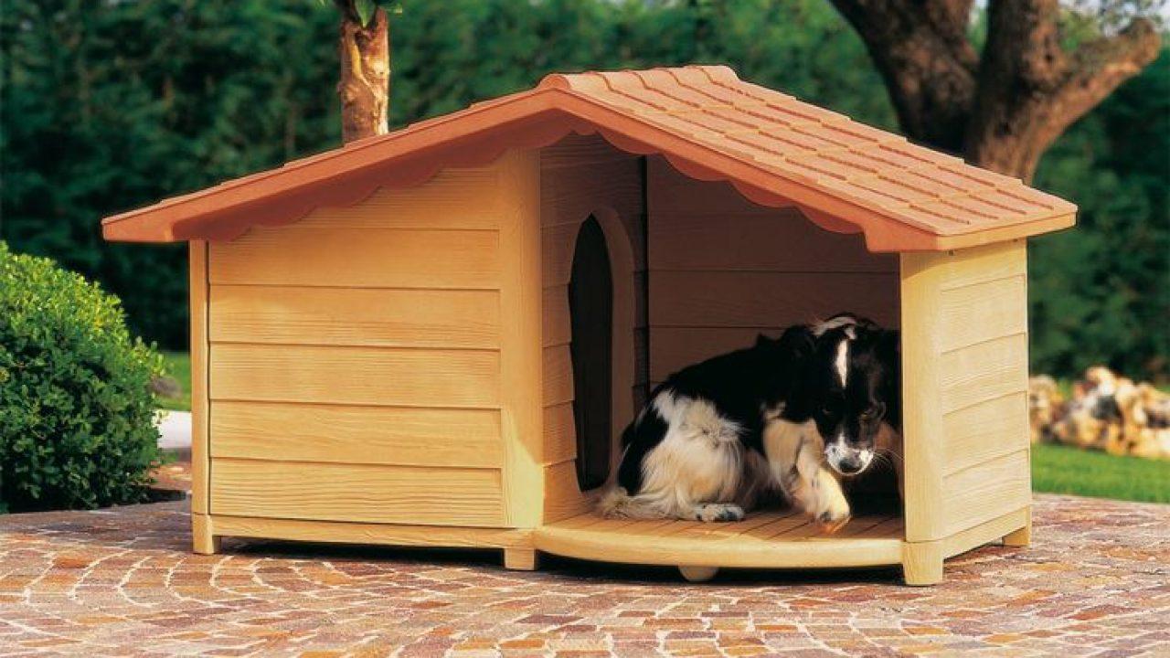 Casette Per Cani In Plastica.Cucce Per Cani Prezzi E Offerte