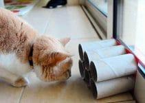 migliori-giochi-per-gatti
