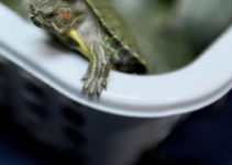 migliore-vasca-tartarughe